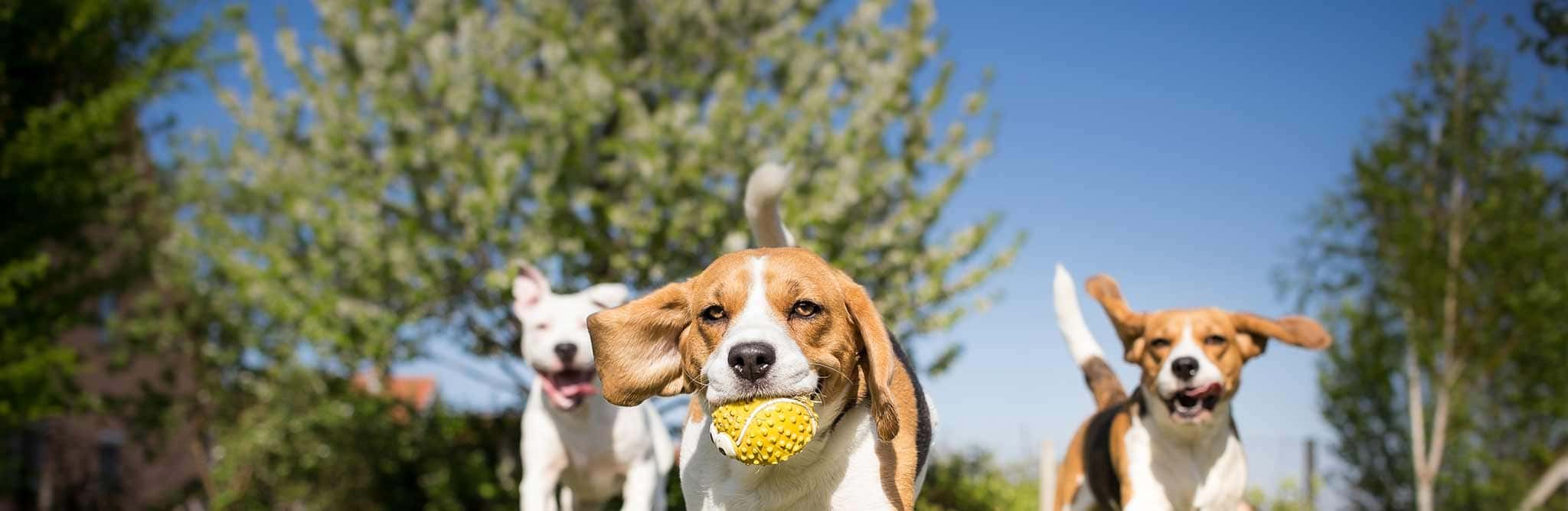 Three dogs playing with a ball in the park